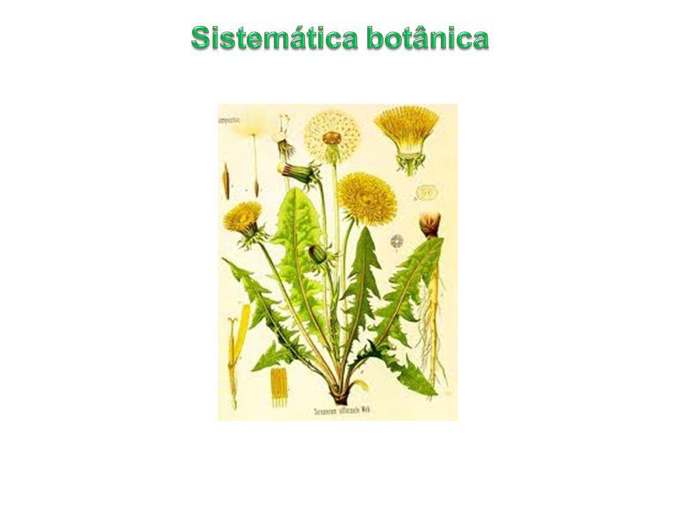 Permite o estabelecimento de um método estável para as denominações científicas empregadas Princípios do Código Internacional de Nomenclatura Botânica 1- É independente da nomenclatura zoológica 2- Aplicação dos nomes dos grupos taxonômicos é determinada pelo método dos tipos nomenclaturais.