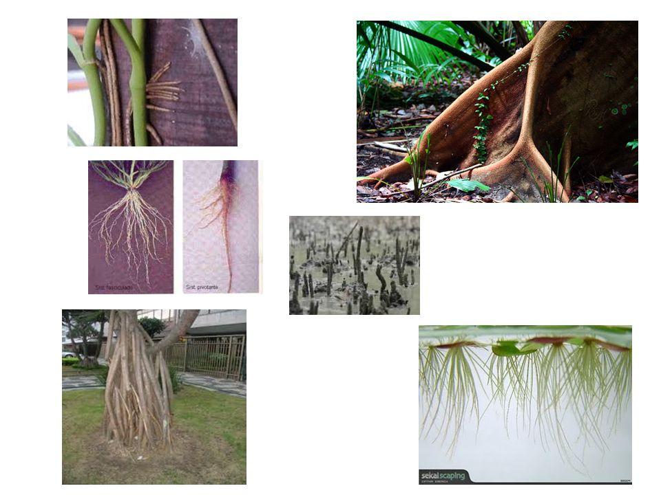 Período descritivo: classificação baseada na aparência ou hábito das plantas.