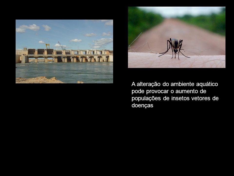 A alteração do ambiente aquático pode provocar o aumento de populações de insetos vetores de doenças