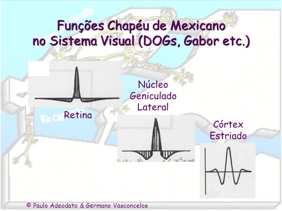 © Paulo Adeodato & Germano Vasconcelos Funções Chapéu de Mexicano no Sistema Visual (DOGs, Gabor etc.) Retina Núcleo Geniculado Lateral Córtex Estriad