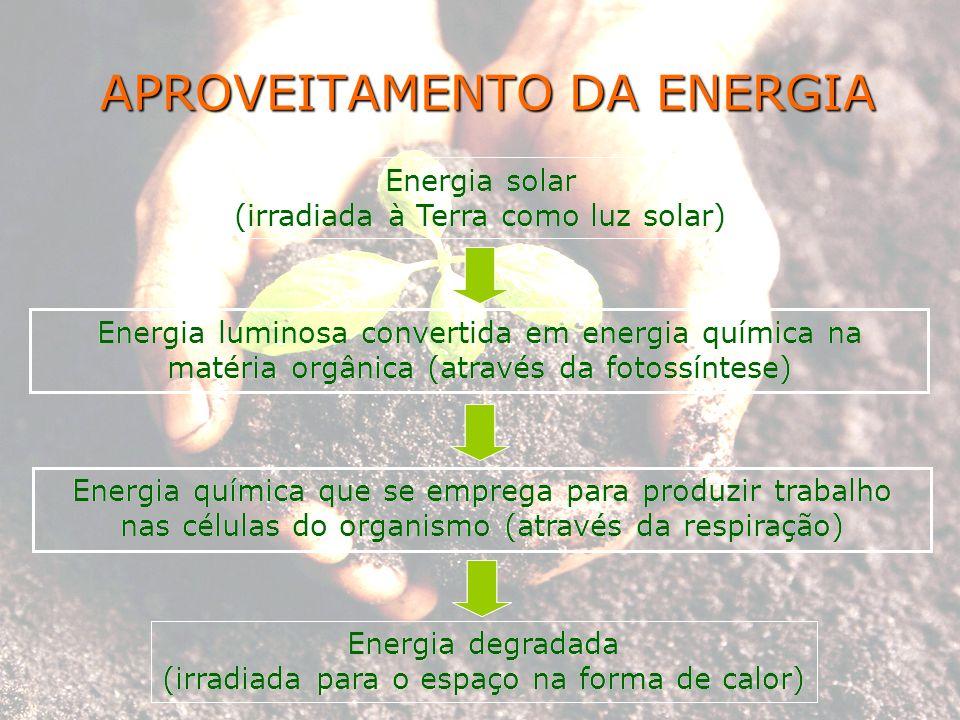 APROVEITAMENTO DA ENERGIA Energia solar (irradiada à Terra como luz solar) Energia luminosa convertida em energia química na matéria orgânica (através