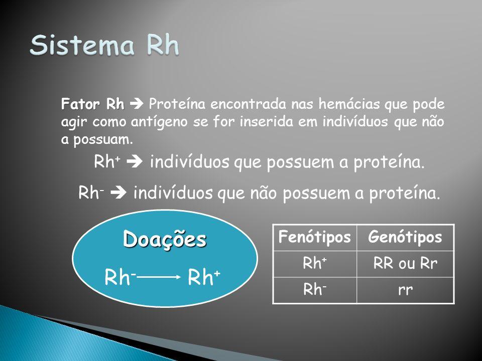 Fator Rh Fator Rh Proteína encontrada nas hemácias que pode agir como antígeno se for inserida em indivíduos que não a possuam. Rh + indivíduos que po