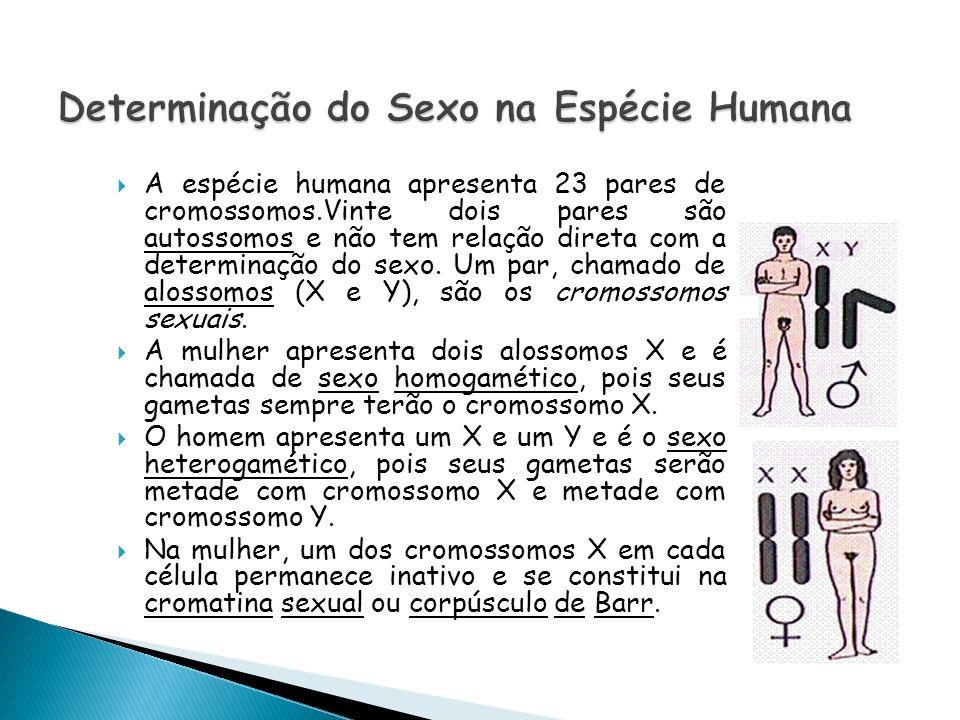 A espécie humana apresenta 23 pares de cromossomos.Vinte dois pares são autossomos e não tem relação direta com a determinação do sexo. Um par, chamad