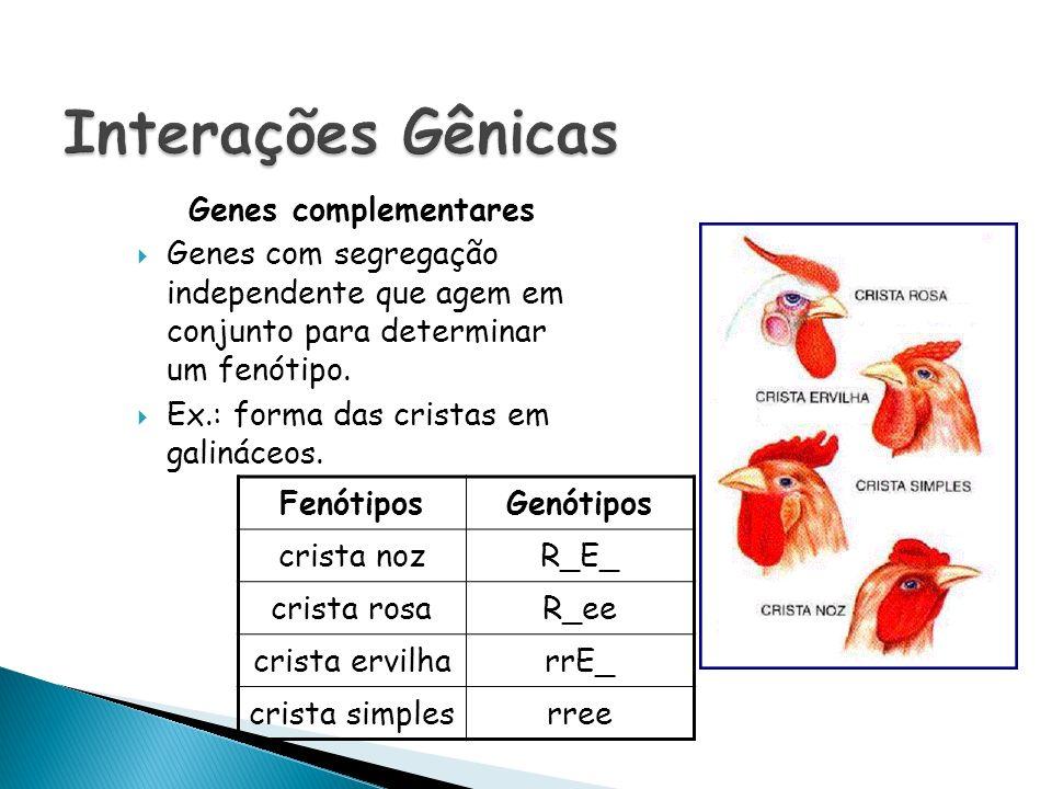 Genes complementares Genes com segregação independente que agem em conjunto para determinar um fenótipo. Ex.: forma das cristas em galináceos. Fenótip