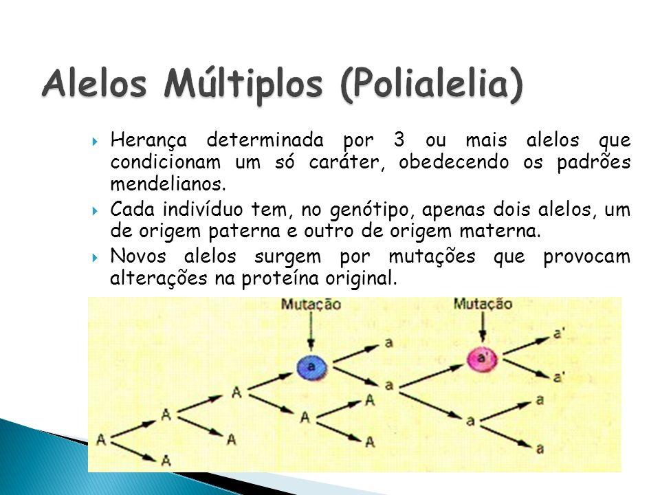 Herança determinada por 3 ou mais alelos que condicionam um só caráter, obedecendo os padrões mendelianos. Cada indivíduo tem, no genótipo, apenas doi
