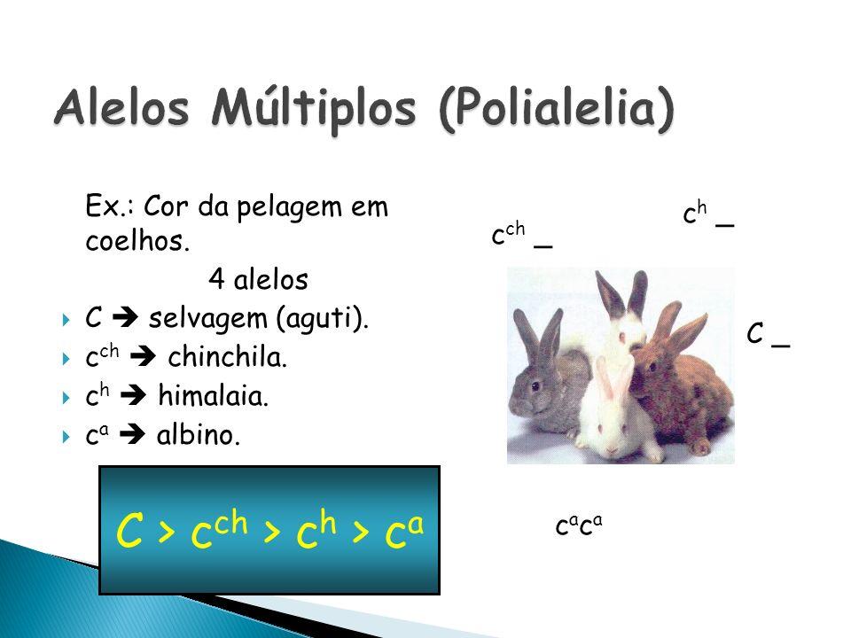 Ex.: Cor da pelagem em coelhos. 4 alelos C selvagem (aguti). c ch chinchila. c h himalaia. c a albino. C > c ch > c h > c a C _ c ch _ c h _ cacacaca