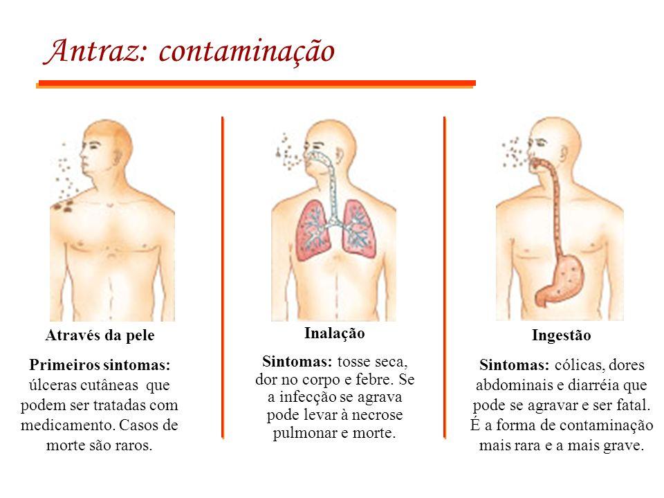 Antraz: contaminação Através da pele Primeiros sintomas: úlceras cutâneas que podem ser tratadas com medicamento. Casos de morte são raros. Inalação S