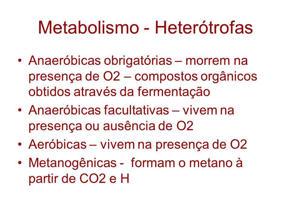 Metabolismo - Heterótrofas Anaeróbicas obrigatórias – morrem na presença de O2 – compostos orgânicos obtidos através da fermentação Anaeróbicas facult