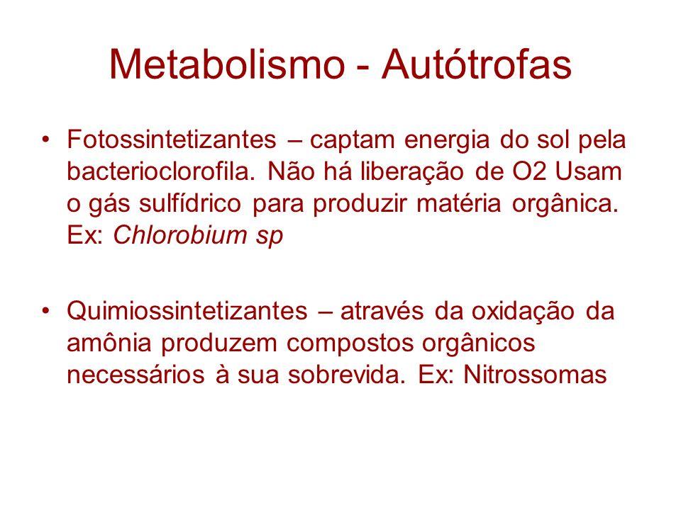 Metabolismo - Autótrofas Fotossintetizantes – captam energia do sol pela bacterioclorofila. Não há liberação de O2 Usam o gás sulfídrico para produzir