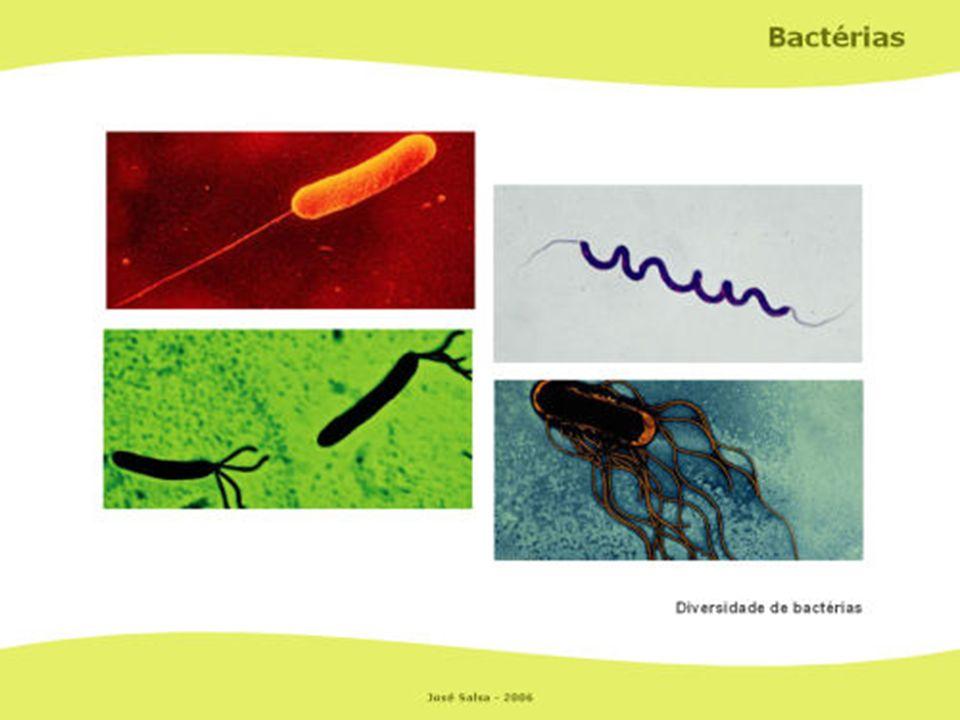 Salmonela typhi Staphylococcus aureus Vibrio colerae