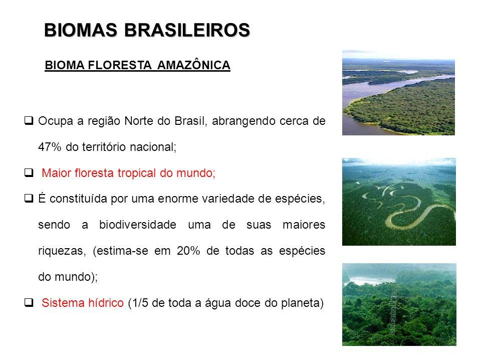 BIOMAS BRASILEIROS Ocupa a região Norte do Brasil, abrangendo cerca de 47% do território nacional; Maior floresta tropical do mundo; É constituída por