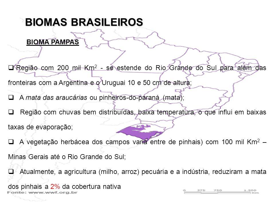 BIOMAS BRASILEIROS Região com 200 mil Km 2 - se estende do Rio Grande do Sul para além das fronteiras com a Argentina e o Uruguai 10 e 50 cm de altura