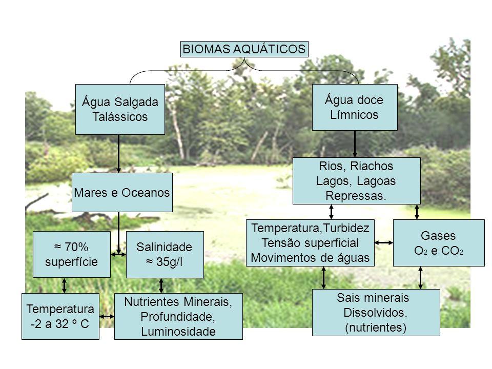 Água doce Límnicos Água Salgada Talássicos Mares e Oceanos 70% superfície Salinidade 35g/l Temperatura -2 a 32 º C Nutrientes Minerais, Profundidade,