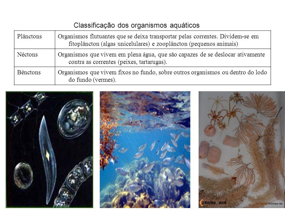 PlânctonsOrganismos flutuantes que se deixa transportar pelas correntes. Dividem-se em fitoplâncton (algas unicelulares) e zooplâncton (pequenos anima