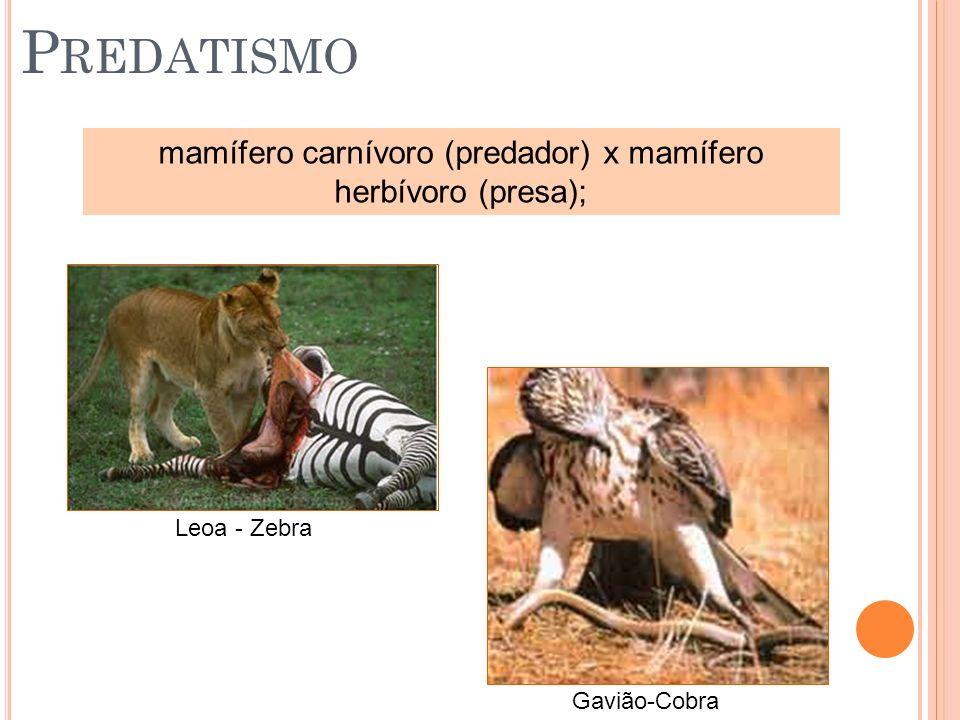 P REDATISMO mamífero carnívoro (predador) x mamífero herbívoro (presa); Leoa - Zebra Gavião-Cobra
