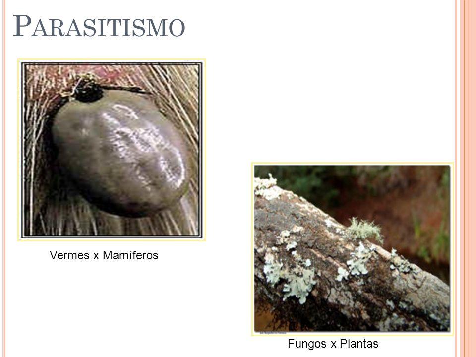 P ARASITISMO Vermes x Mamíferos Fungos x Plantas