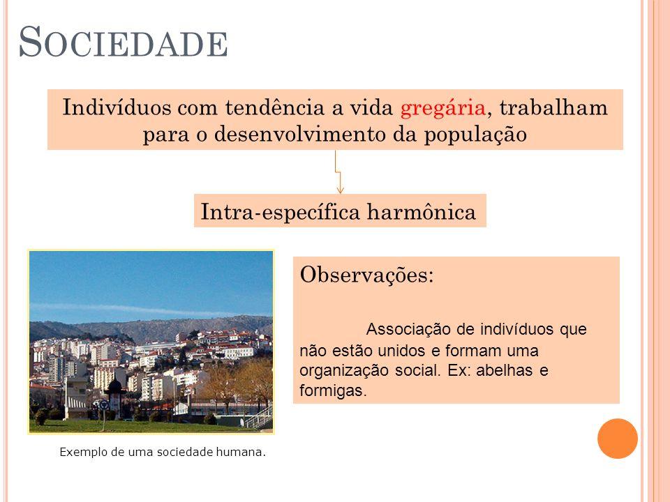 S OCIEDADE Indivíduos com tendência a vida gregária, trabalham para o desenvolvimento da população Intra-específica harmônica Exemplo de uma sociedade