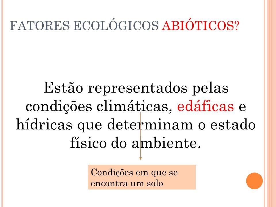 FATORES ECOLÓGICOS ABIÓTICOS? Estão representados pelas condições climáticas, edáficas e hídricas que determinam o estado físico do ambiente. Condiçõe