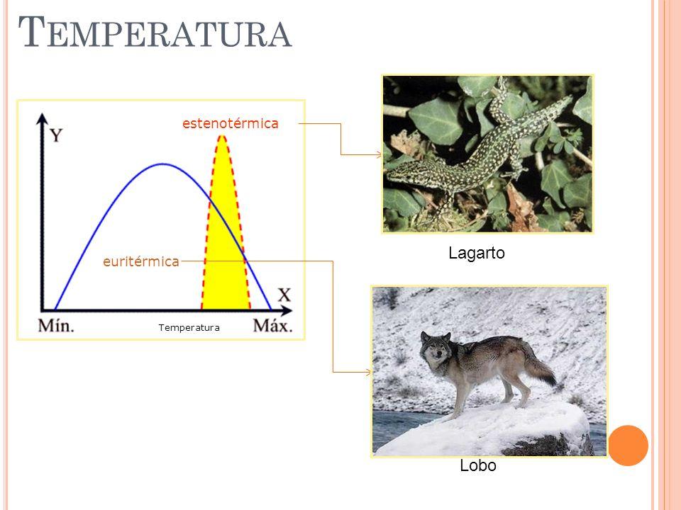 T EMPERATURA euritérmica estenotérmica Temperatura Lagarto Lobo