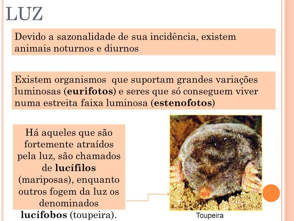 LUZ Devido a sazonalidade de sua incidência, existem animais noturnos e diurnos Existem organismos que suportam grandes variações luminosas ( eurifoto