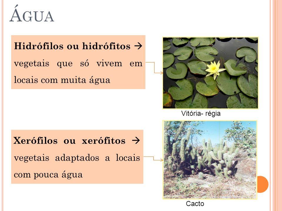 Á GUA Hidrófilos ou hidrófitos vegetais que só vivem em locais com muita água Xerófilos ou xerófitos vegetais adaptados a locais com pouca água Vitóri