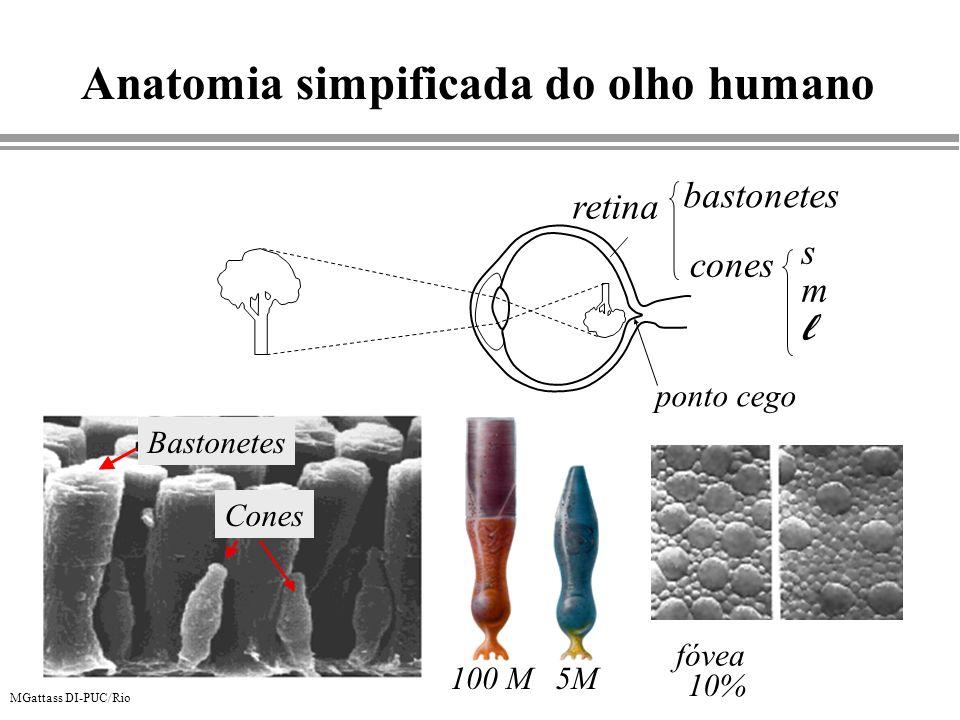 MGattass DI-PUC/Rio Anatomia simpificada do olho humano retina bastonetes cones smlsml Bastonetes Cones 100 M5M fóvea 10% ponto cego