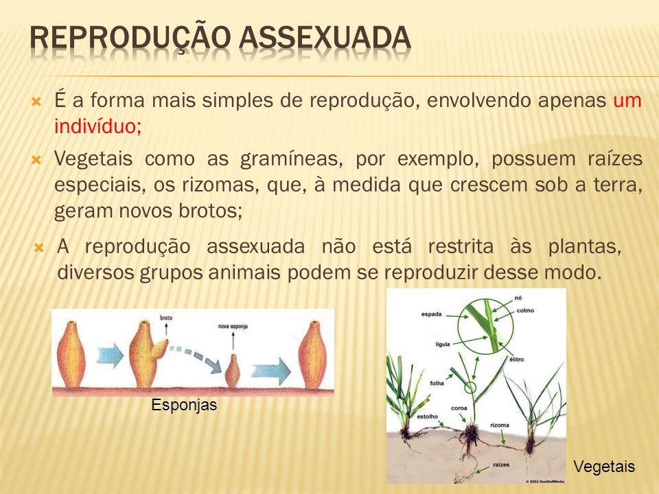 É a forma mais simples de reprodução, envolvendo apenas um indivíduo; Vegetais como as gramíneas, por exemplo, possuem raízes especiais, os rizomas, q