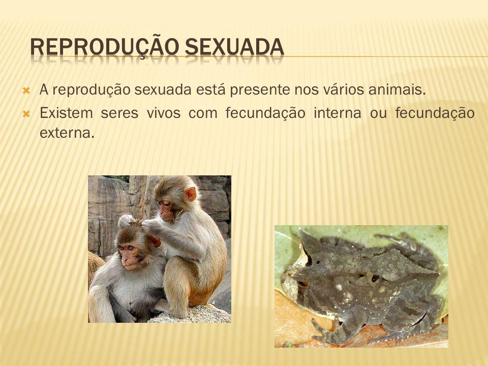 A reprodução sexuada está presente nos vários animais. Existem seres vivos com fecundação interna ou fecundação externa.