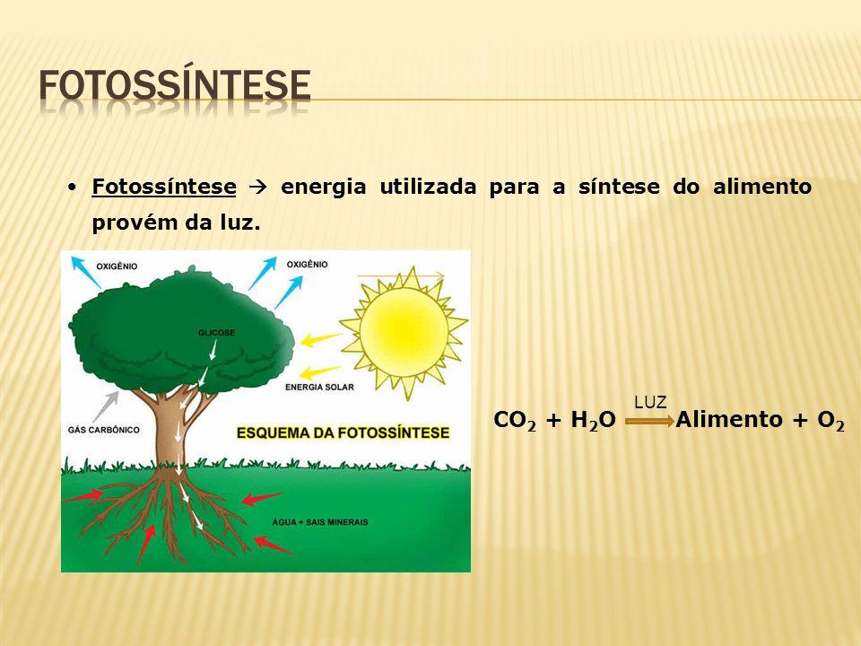 Fotossíntese energia utilizada para a síntese do alimento provém da luz. CO 2 + H 2 O Alimento + O 2 LUZ