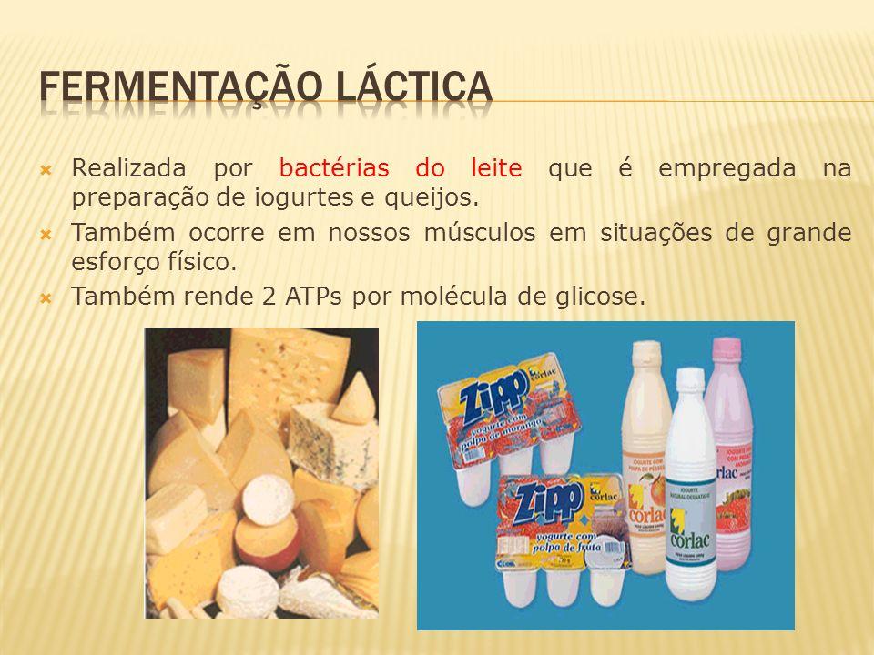 Realizada por bactérias do leite que é empregada na preparação de iogurtes e queijos. Também ocorre em nossos músculos em situações de grande esforço