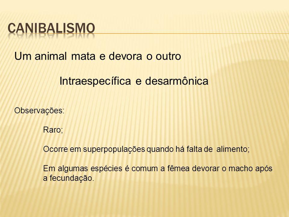 Um animal mata e devora o outro Intraespecífica e desarmônica Observações: Raro; Ocorre em superpopulações quando há falta de alimento; Em algumas esp
