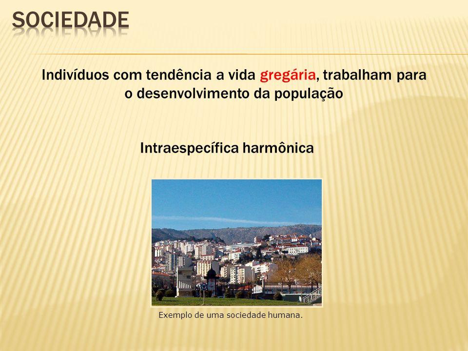 Indivíduos com tendência a vida gregária, trabalham para o desenvolvimento da população Intraespecífica harmônica Exemplo de uma sociedade humana.