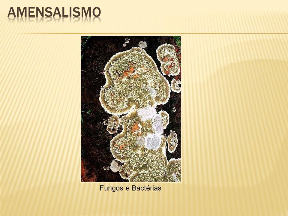 Fungos e Bactérias