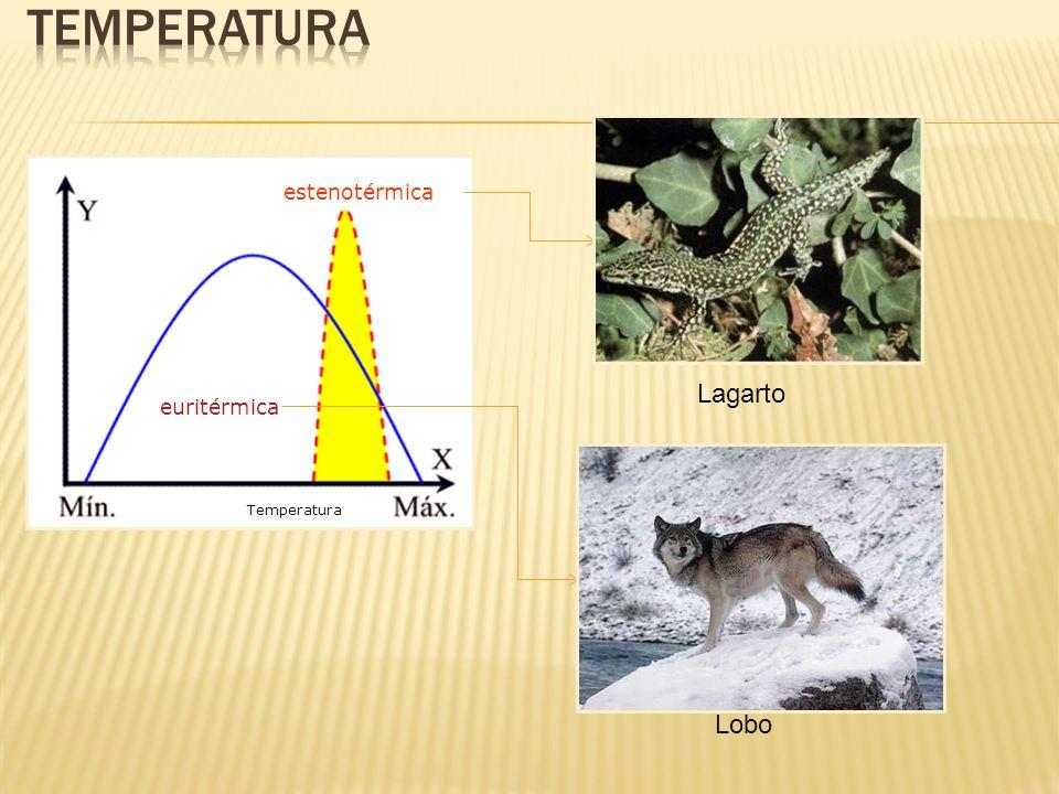 euritérmica estenotérmica Temperatura Lagarto Lobo