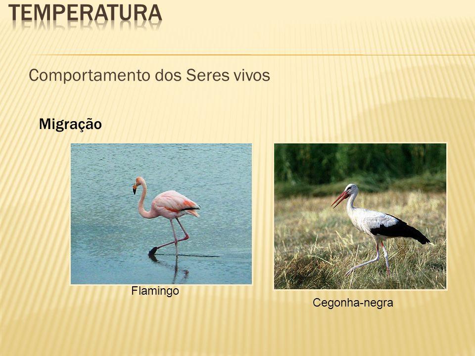 Comportamento dos Seres vivos Migração Flamingo Cegonha-negra