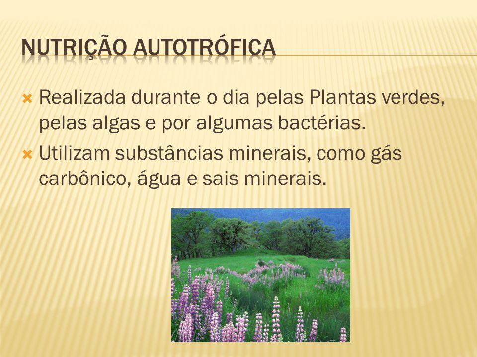 Realizada durante o dia pelas Plantas verdes, pelas algas e por algumas bactérias. Utilizam substâncias minerais, como gás carbônico, água e sais mine