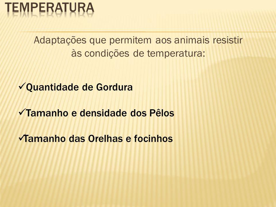 Adaptações que permitem aos animais resistir às condições de temperatura: Quantidade de Gordura Tamanho e densidade dos Pêlos Tamanho das Orelhas e fo