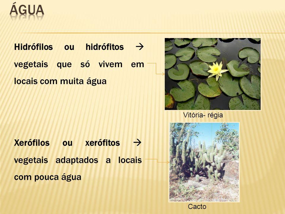 Hidrófilos ou hidrófitos vegetais que só vivem em locais com muita água Xerófilos ou xerófitos vegetais adaptados a locais com pouca água Vitória- rég