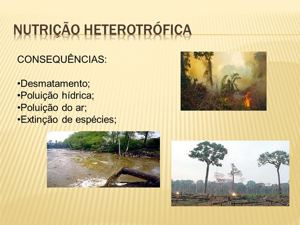 CONSEQUÊNCIAS: Desmatamento; Poluição hídrica; Poluição do ar; Extinção de espécies;