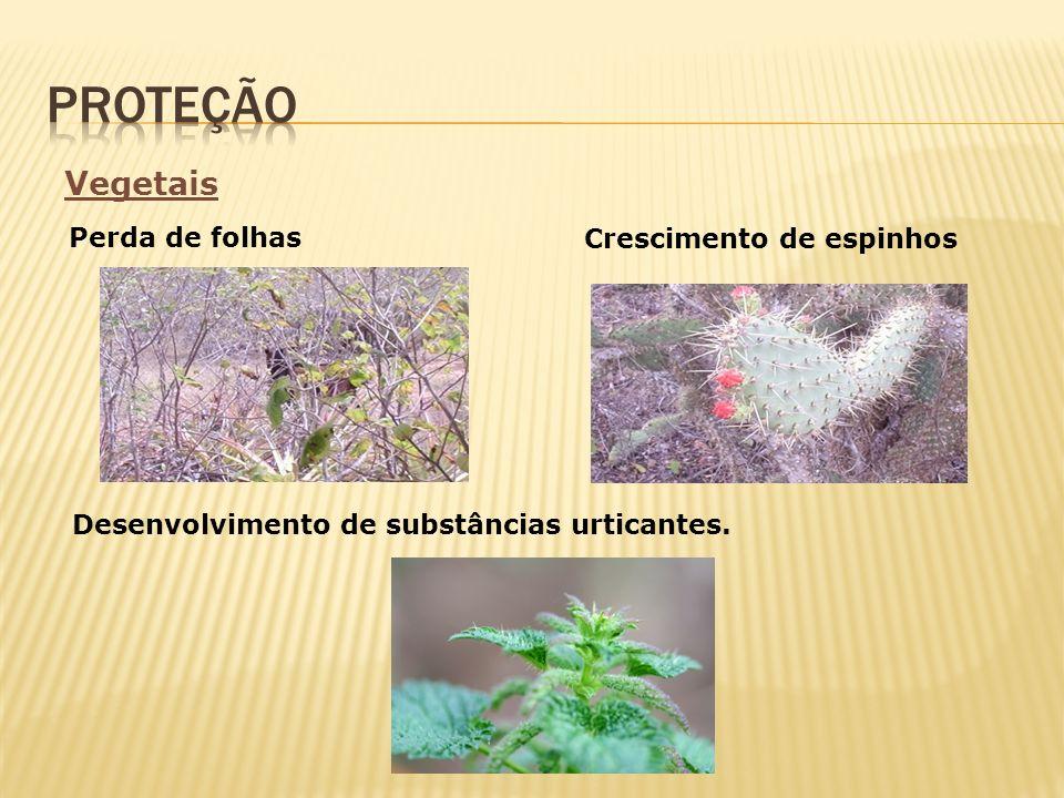 Desenvolvimento de substâncias urticantes. Vegetais Crescimento de espinhos Perda de folhas