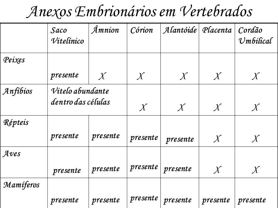 Anexos Embrionários em Vertebrados Saco Vitelínico ÂmnionCórionAlantóidePlacentaCordão Umbilical Peixes presente X X X X X AnfíbiosVitelo abundante de