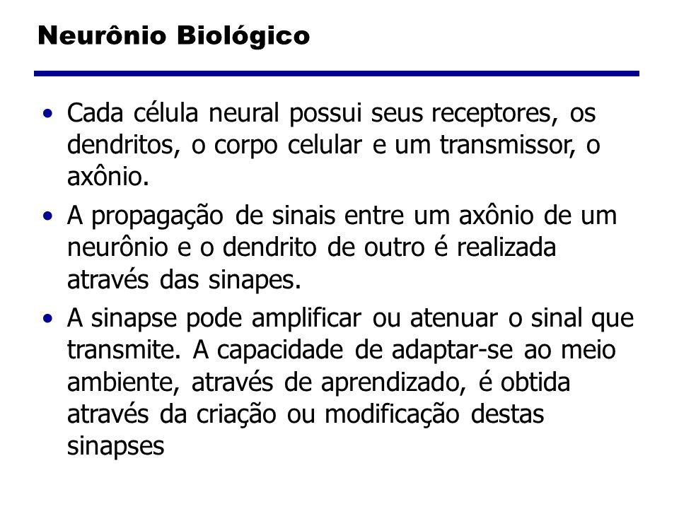 Cada célula neural possui seus receptores, os dendritos, o corpo celular e um transmissor, o axônio.
