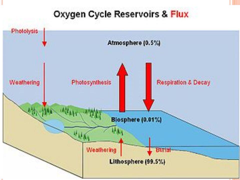 FLUXO DO OXIGÊNIO A maior fonte do oxigênio presente na atmosfera e biosfera é a fotossíntese que transforma dióxido de carbono e água em oxigênio e açúcar; 6CO 2 + 6H 2 O + energia C 6 H 12 O 6 + 6O 2 O oxigênio também tem um ciclo entre a biosfera e a litosfera, através das conchas de carbonato de cálcio (CaCO 3 ) produzidas por organismos marinhos A fotossíntese nos oceanos contribui aproximadamente com 45% do oxigênio total livre no ciclo do oxigênio.