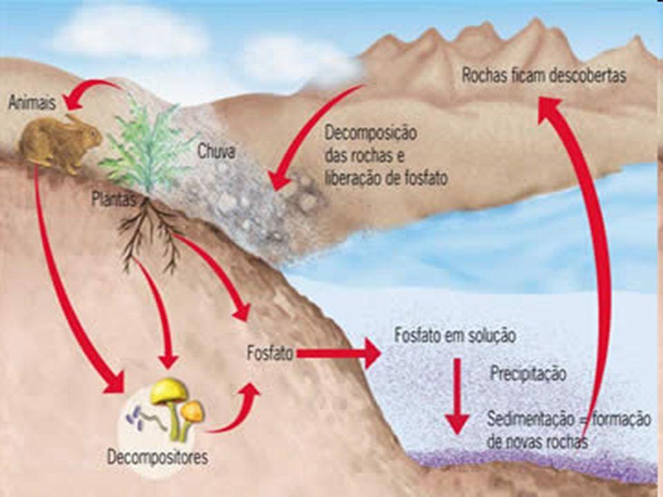 Existem dois ciclos do fósforo que acontecem em escalas de tempo bem diferentes.