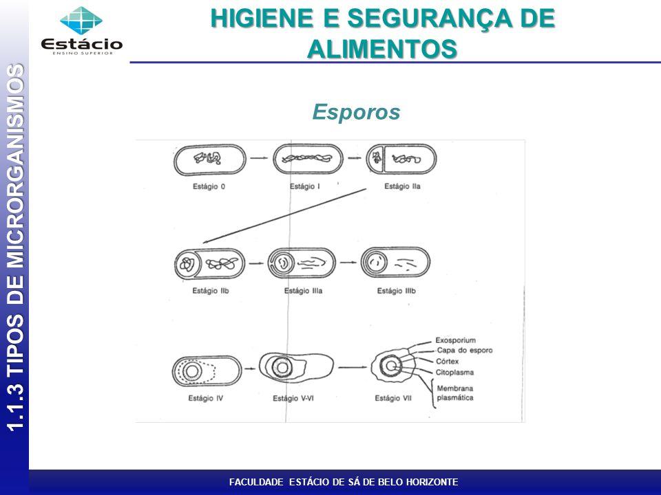 FACULDADE ESTÁCIO DE SÁ DE BELO HORIZONTE Esporos 1.1.3 TIPOS DE MICRORGANISMOS HIGIENE E SEGURANÇA DE ALIMENTOS