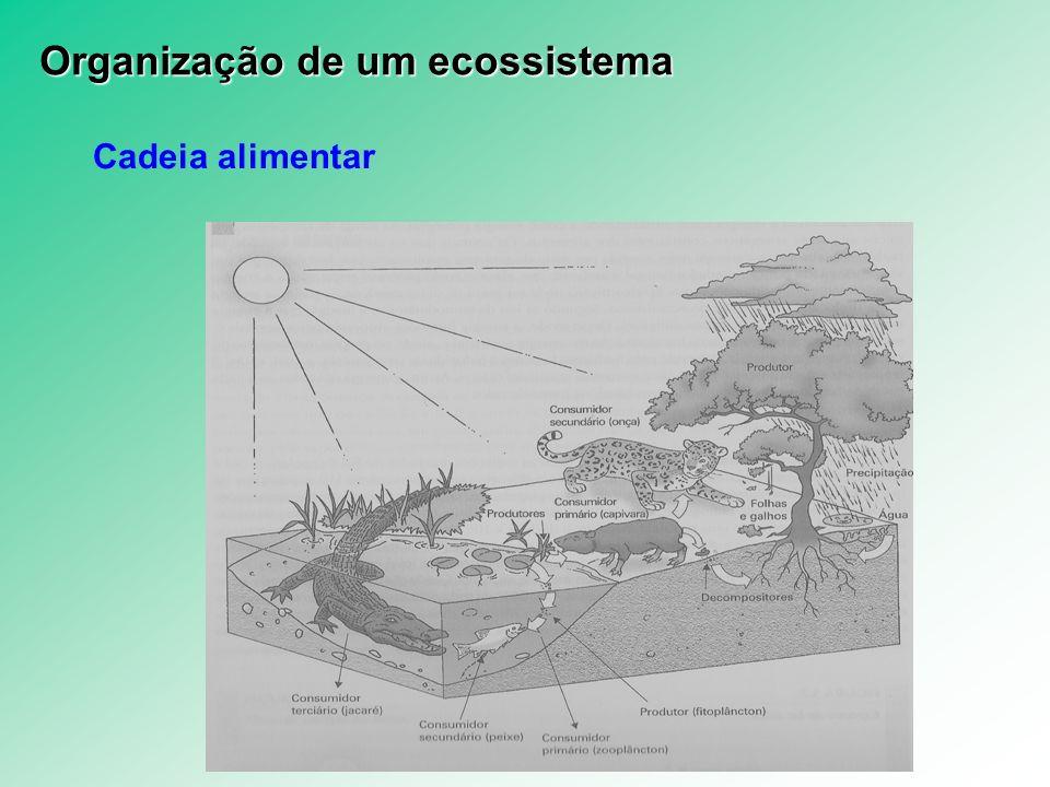Cadeia alimentar Organização de um ecossistema