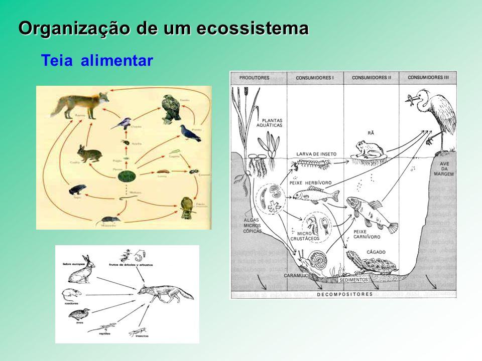 Teia alimentar Organização de um ecossistema