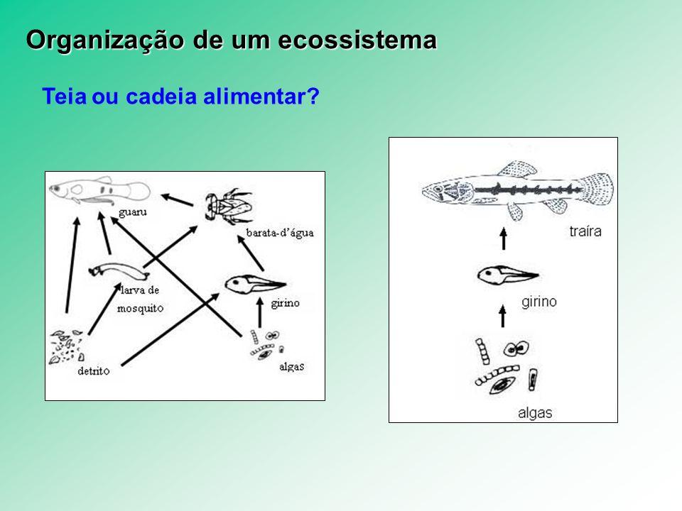 Teia ou cadeia alimentar? Organização de um ecossistema