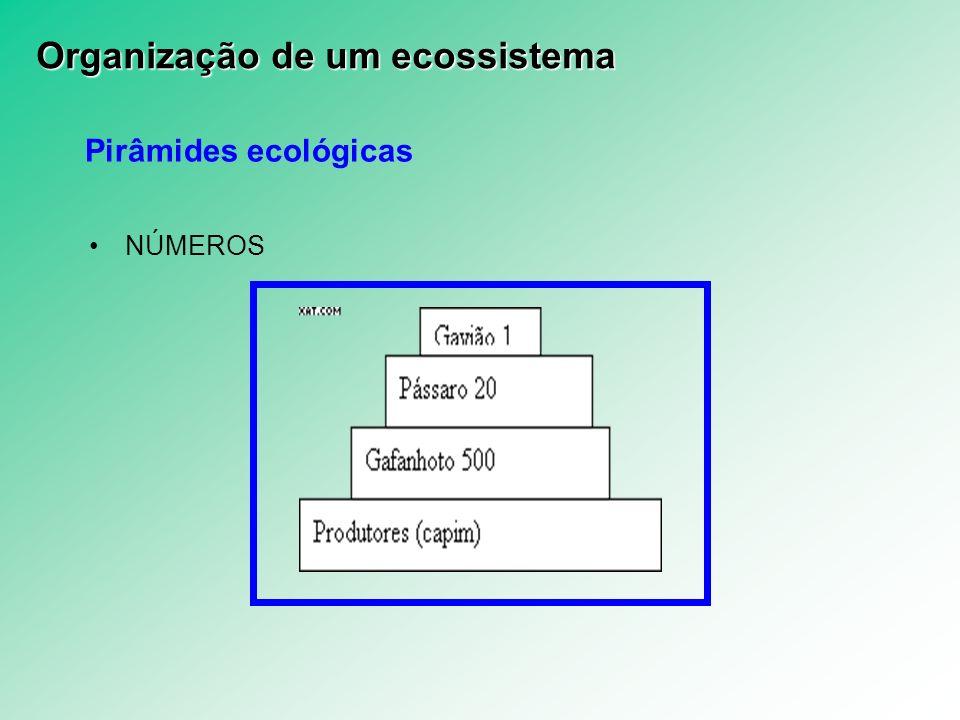 Pirâmides ecológicas NÚMEROS Organização de um ecossistema