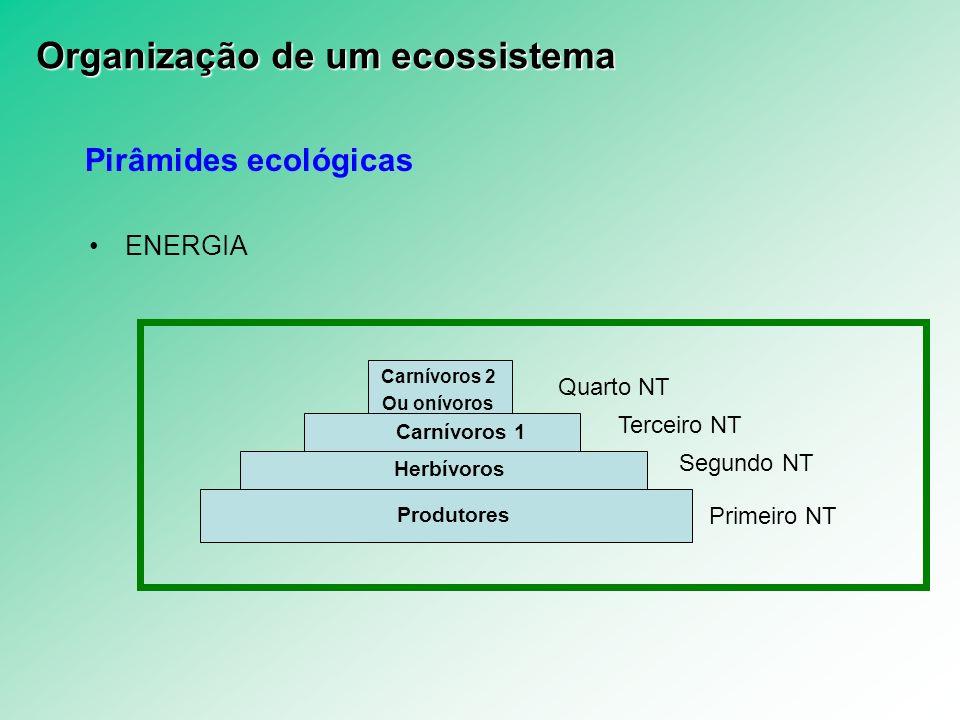 Pirâmides ecológicas ENERGIA Primeiro NT Segundo NT Terceiro NT Quarto NT Produtores Herbívoros Carnívoros 1 Carnívoros 2 Ou onívoros Organização de u